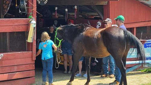 Warren County Fair horse